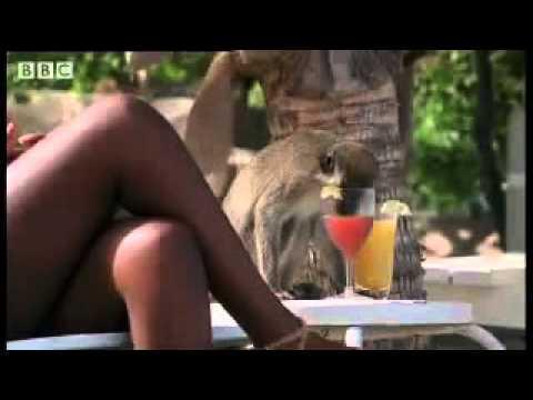 Khỉ say xỉn -Drunken monkey