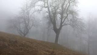 4K Nature: Scary fog