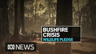 Some koala populations could now be endangered after bushfire disaster | ABC News