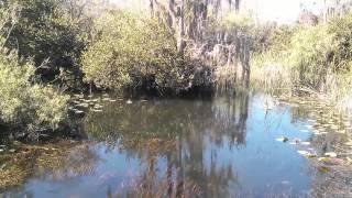 Everglades - Tamiami Trail