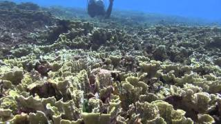 Bali Dive Safari Island Tracking Paul Ranky Copyright VideoClip03