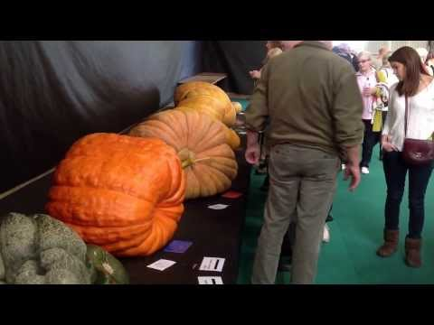 Giant Veg: UK Giant Vegetable Championships Malvern Autumn Show 2013