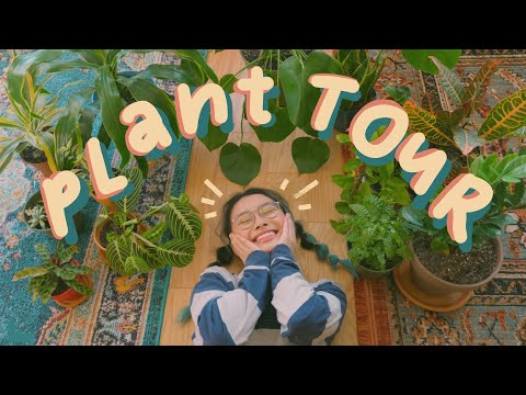 plant tour ! ft. a semi-bad plant mom ✨