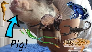 ALL OF MY EXOTIC PETS