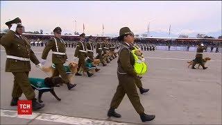 Службові собаки і цуценята стали окрасою військового параду у Чилі