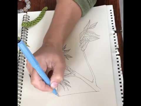 ceviz resim çizim