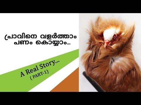 Pigeon farming (Tycoon media) Kerala new business opportunities