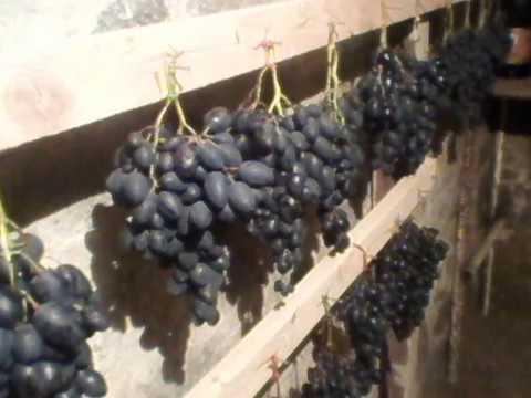 Как хранить виноград молдова в домашних условиях