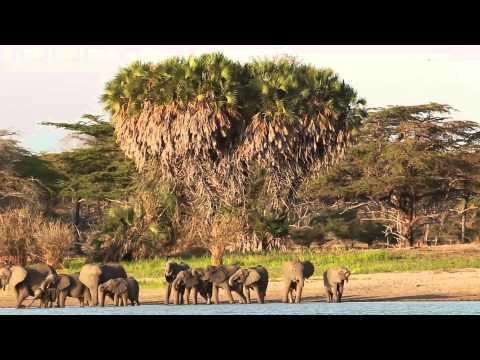 Dream Honeymoon: Tanzania + Zanzibar