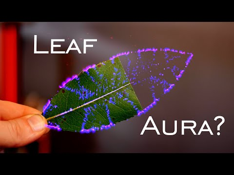 Infamous Phantom Leaf Experiment EXPOSED