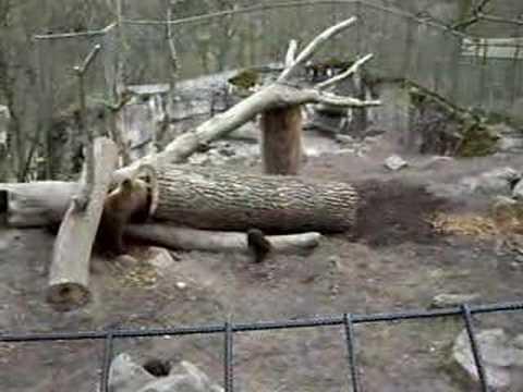 Stockholm zoo