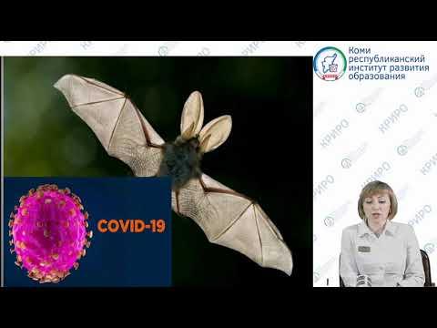 «Профилактика вирусных инфекций: гриппа, короновирусной инфекции Covid2019, ОРВИ»