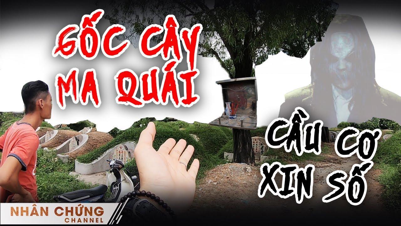 Chuyện tâm linh đáng sợ ở nghĩa địa Triều Châu (Phần 2): Đến gốc cây này cầu cơ, xin số là trúng!