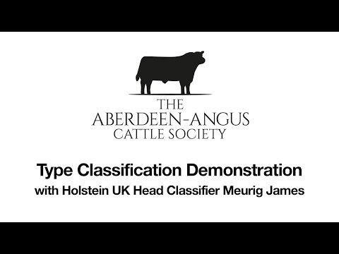 Aberdeen Angus Society Type Classification demo