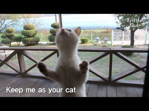 This Cute Kitten Picks Her Owner | SBS Animal