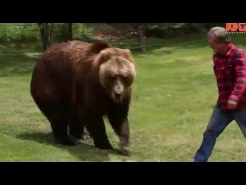 KEREN.!!! Persahabatan kakek tua dan Bruang Grizzly Besar Mp3