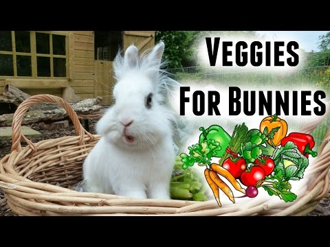 What To Feed A Rabbit | Safe Veggies