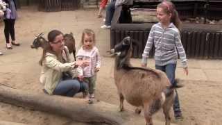 Animals - Małe dzieci lubią kózki - Zoo Łódź 2013 - Full HD