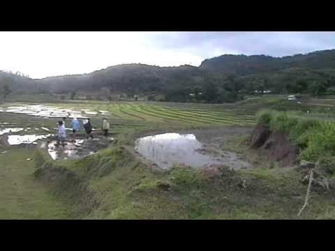 Karen hill tribe getting their rice fields ready near Chiang Mai Thailand.