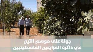 جولة على موسم التين في ذاكرة المزارعين الفلسطينيين