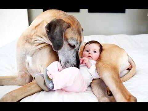 Смешные собаки и дети в фото