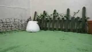 ホーランドロップうさぎの赤ちゃん