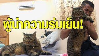 พ่อบอกเกลียดแมว แต่พอเอามาอยู่ด้วย เห็นนอนร้อนถึงขั้นยอมติดแอร์ให้ทันที!!