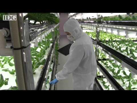 Toshiba's high-tech farm grows organic veggies you don't need to wash