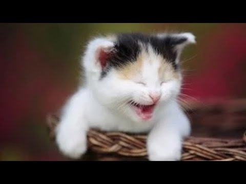 Videos De Risa De Gatos Chistosos Videos Graciosos 2014 Youtube