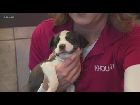 Start 2019 off right and adopt a pet at the Harris County Animal Shelter