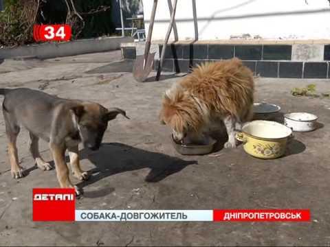 Вопрос: Какие породы собак относятся к долгожителям shy?
