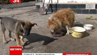 30-летняя собака-долгожитель