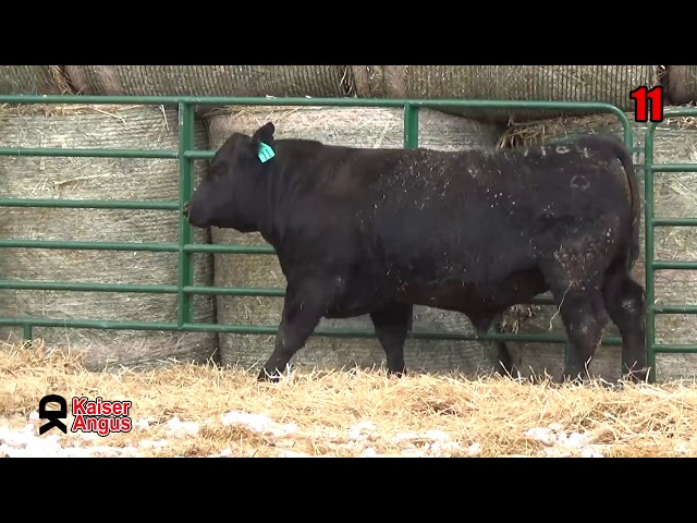 Kaiser Angus Ranch Lot 11