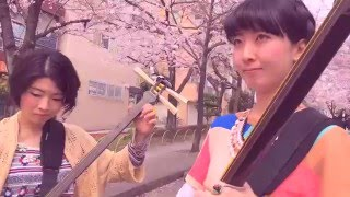 Shamisen Under The Cherry Blossoms II - Ki&Ki 輝&輝 津軽三味線