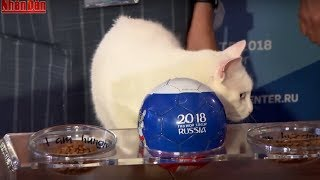 Bản Tin World Cup 2018 (12h45 - 14/6): Mèo Tiên Tri Đã Dự Đoán Kết Quả Trận Mở Màn World Cup 2018