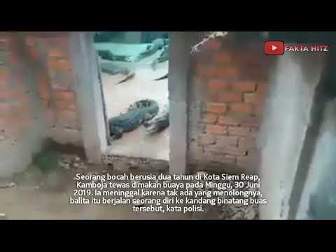 Balita Di Kamboja Tewas!!! Tragis Dimakan Buaya Peliharaan Orangtuanya