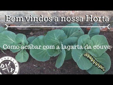 NOSSA HORTA + COMO ACABAR COM LAGARTA NA COUVE - FAMÍLIA DIY