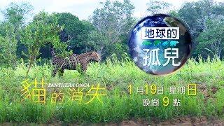 【預告】遠征地球最大濕地 揭開美洲豹消失秘密
