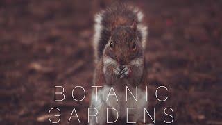 Dublin's Botanic Gardens in Winter - BMPCC4K