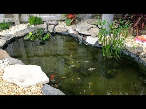 All the fish are HAPPY! *MINI POND*