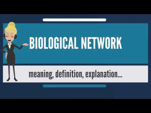 What is BIOLOGICAL NETWORK? What does BIOLOGICAL NETWORK mean? BIOLOGICAL NETWORK meaning