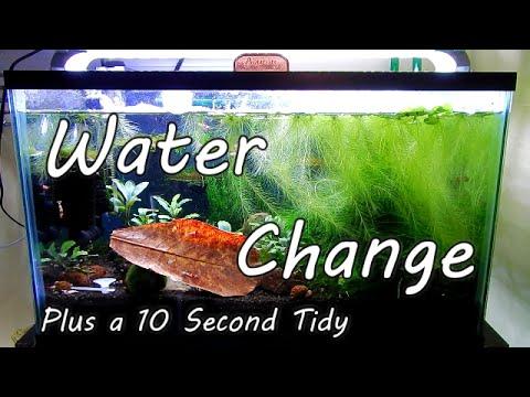 Water Change Plus 10 Second Tidy 蝦 虾