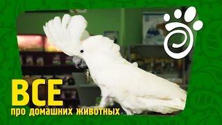 О Содержании Больших Попугаев. Все О Домашних Животных