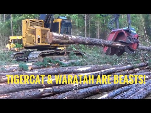 15,000 Hour Tigercat H822 With Waratah 622b Processor Head