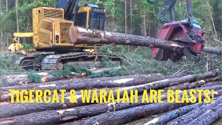 Download Video 15,000 hour Tigercat H822 with Waratah 622b processor head MP3 3GP MP4