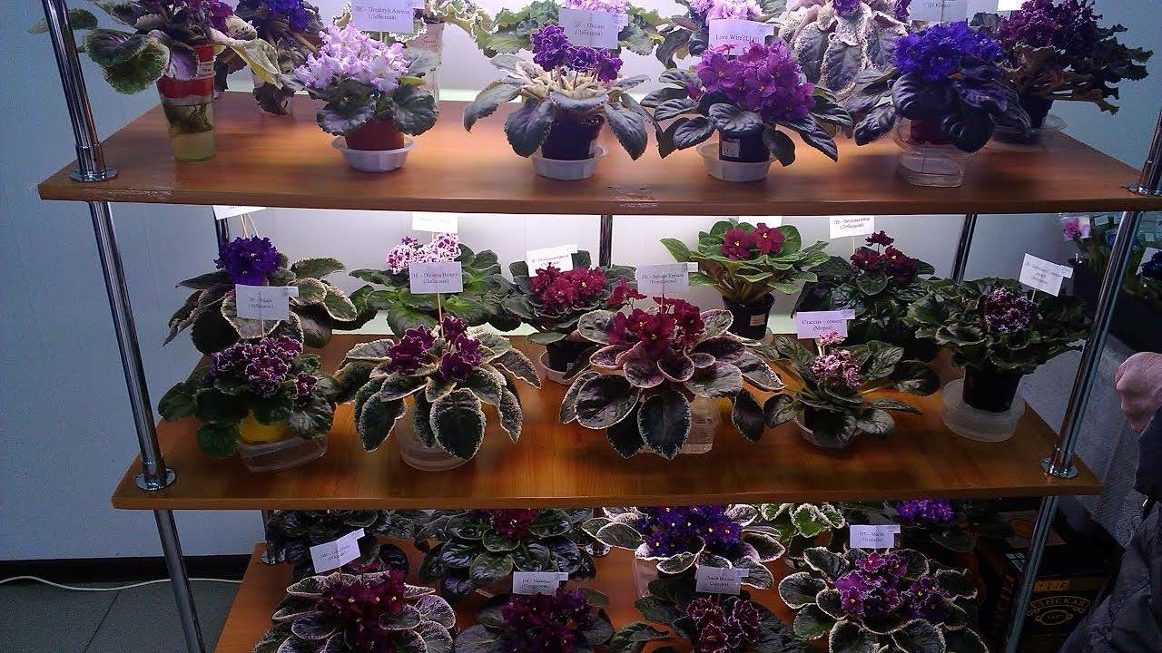 Днем, интернет магазин цветов фиалок днепропетровск