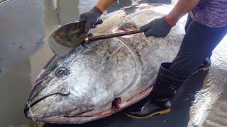 Luxurious sashimi! Giant bluefin tuna cutting show / 巨大黑鮪魚切割秀,鮪魚金三角 - Taiwanese Food
