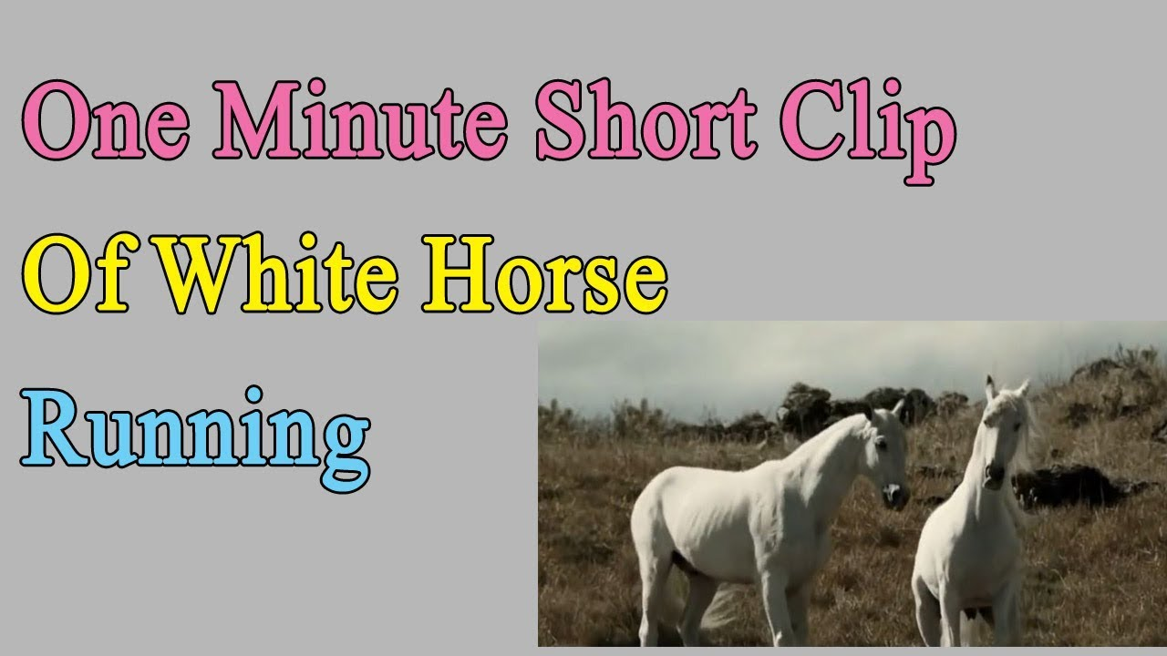 One Minute Clip Of White Horse Running
