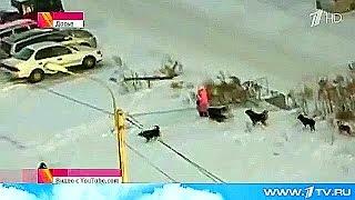 В Чите смертельную опасность для людей представляют стаи бродячих собак.