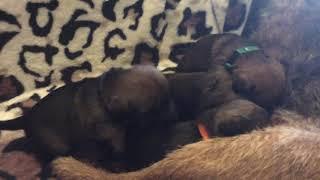 Skye's litter  Update no 4  17 November 20
